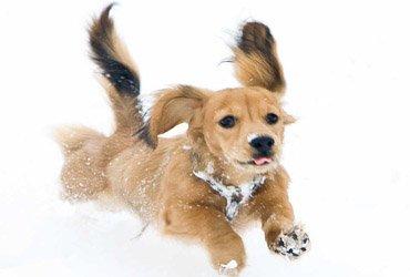 Собачьи бега – классика спортивного беттинга